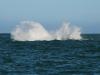 Whale-breeching-4