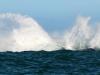 Whale-breeching-4a
