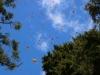 Cerro-Pelon-monarchs-sky-1