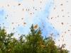 Cerro-Pelon-monarchs-sky-7